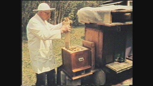 L'apicultur